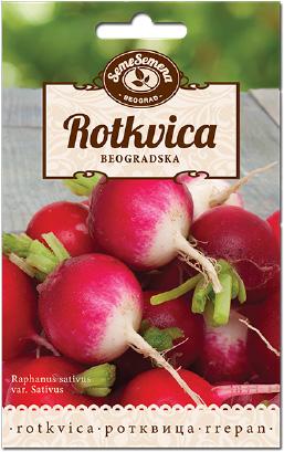 Rotkvica Beogradska 3gr