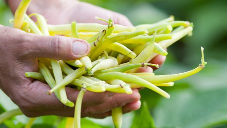 Seme boranije i graška