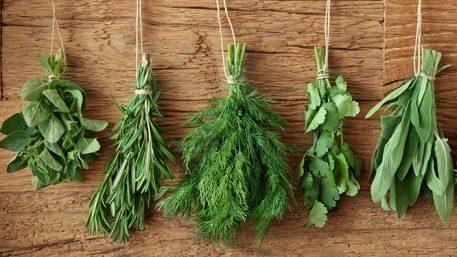 Seme začinskog bilja