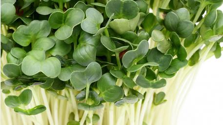 Seme za mikrobilje
